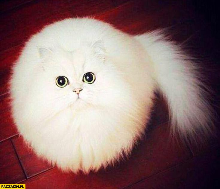 Kot sferyczny