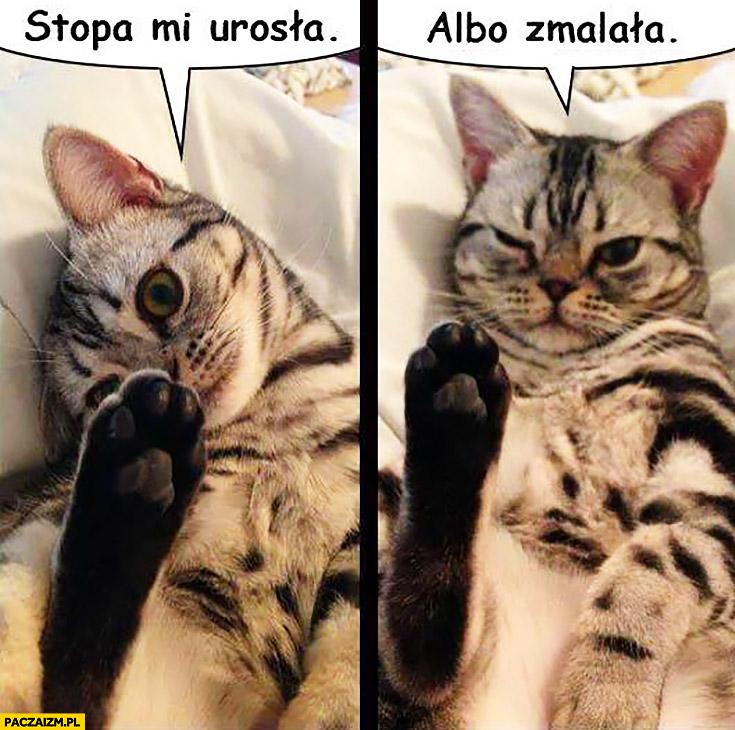 Kot stopa mi urosła albo zmalała