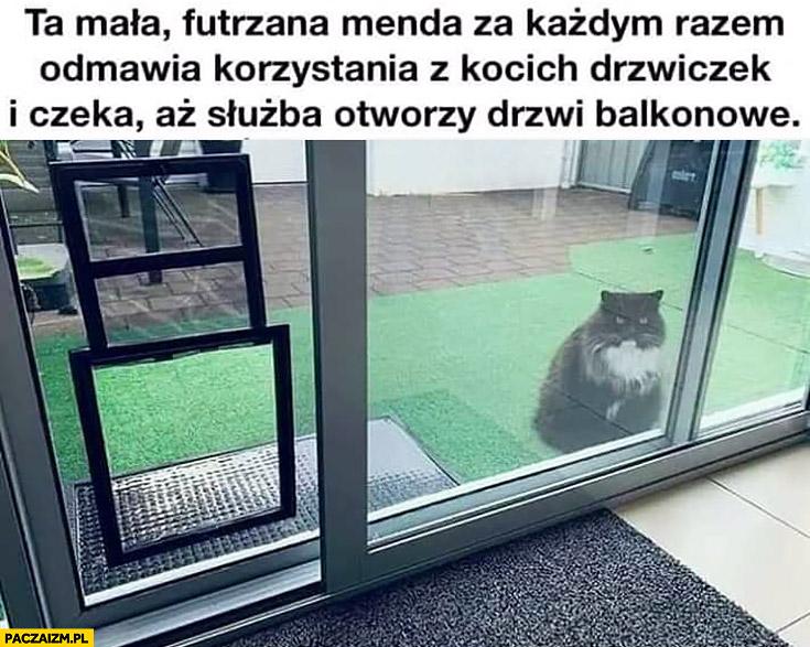 Kot ta mała futrzana menda za każdym razem odmawia korzystania z kocich drzwiczek i czeka aż służba otworzy drzwi balkonowe