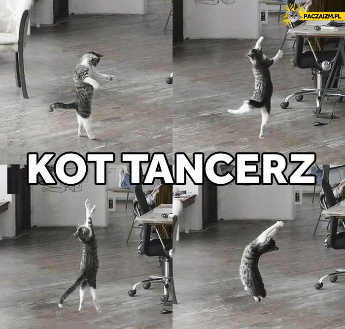 Kot tancerz