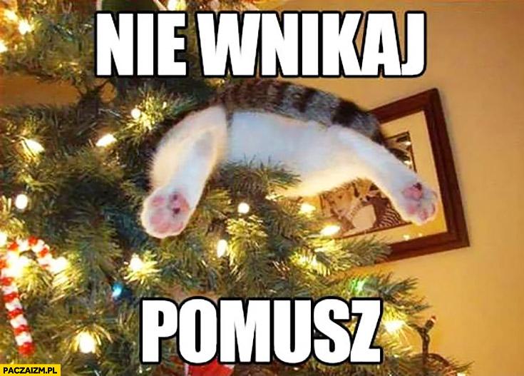 Kot utknął w choince nie wnikaj pomusz
