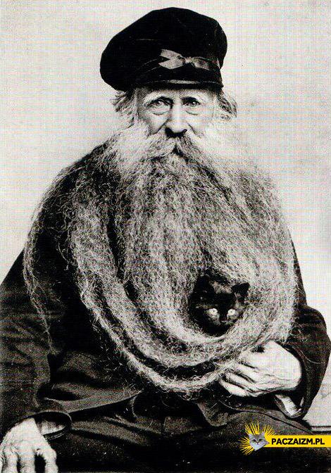 Kot w brodzie