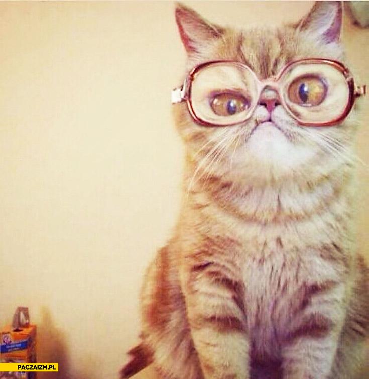 Kot w dziwnych okularach