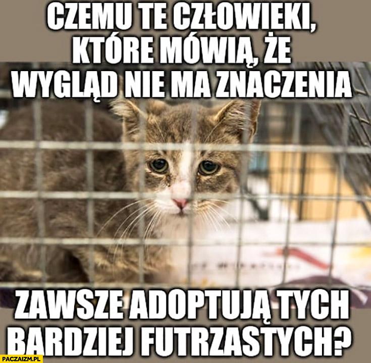 Kot w schronisku czemu te człowieki które mówią, że wygląd nie ma znaczenia zawsze adoptują tych bardziej futrzastych?
