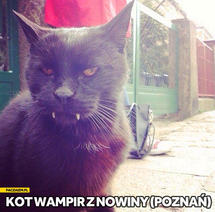Kot wampir z Nowiny Poznań
