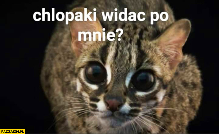 Kot wielkie oczy chłopaki widać po mnie że ćpałem brałem narkotyki?