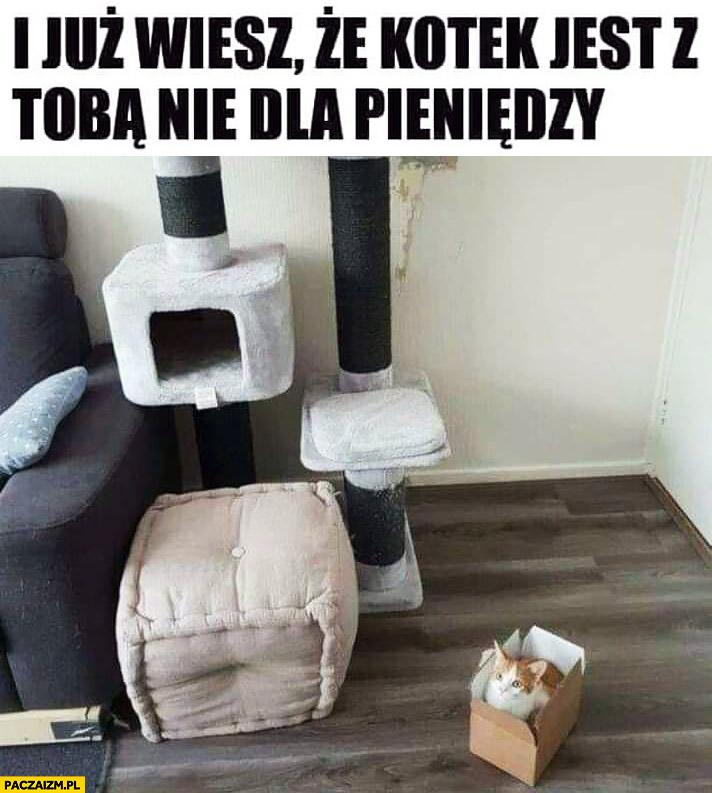 Kot woli pudełko zamiast domku zabawki już wiesz, że kotek jest z Tobą nie dla pieniędzy