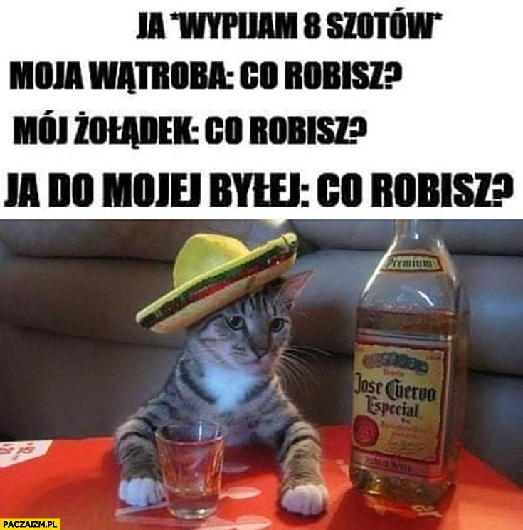 Kot wypijam 8 szotów, wątroba, żołądek, ja do byłej: co robisz?