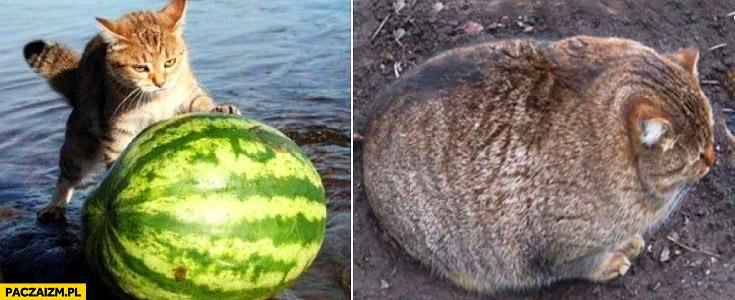 Kot wytacza arbuza z morza wody zjadł go gruby kot