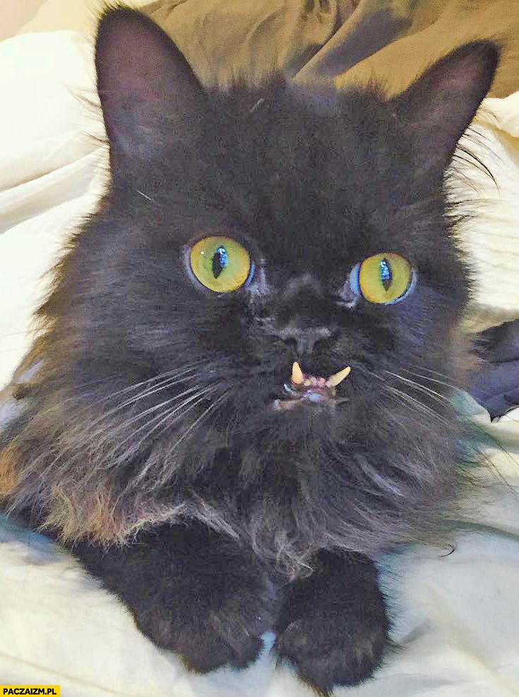 Kot z dziwnym wyrazem twarzy