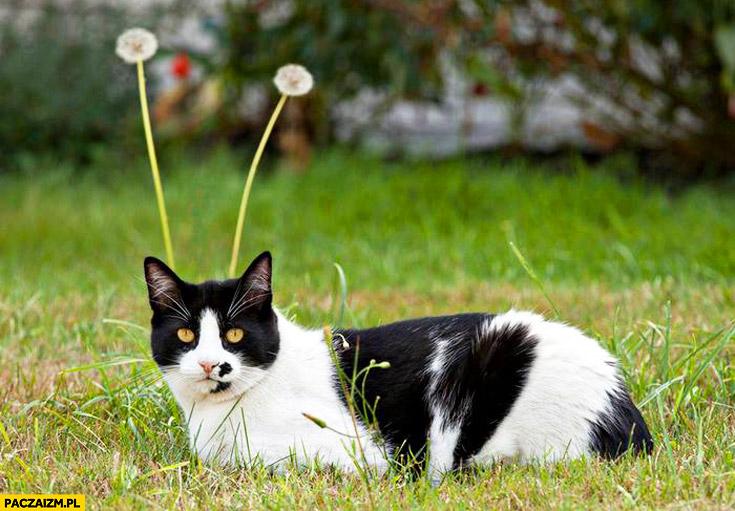 Kot z marsa dmuchawce czółka