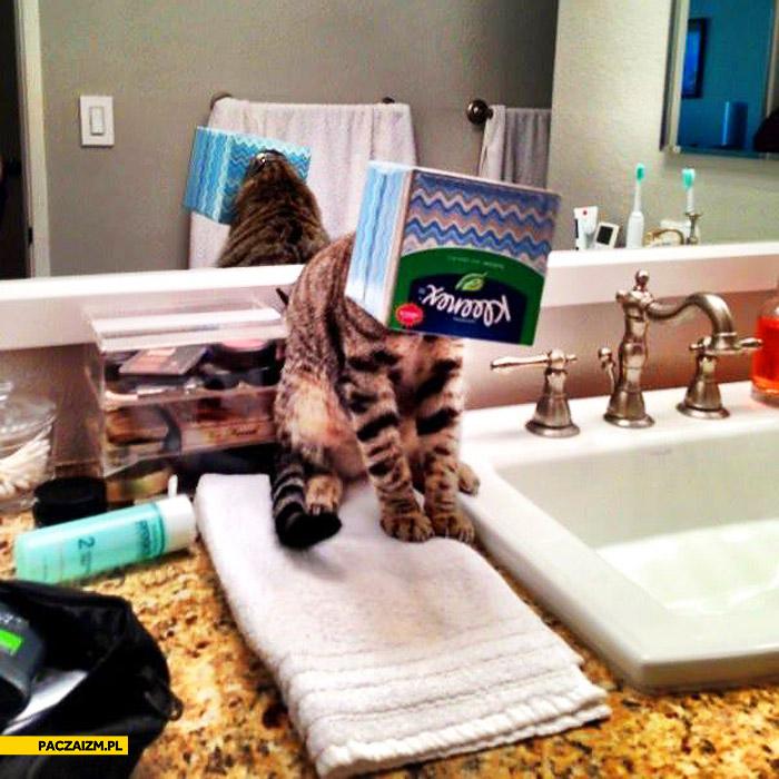 Kot z pudełkiem na głowie