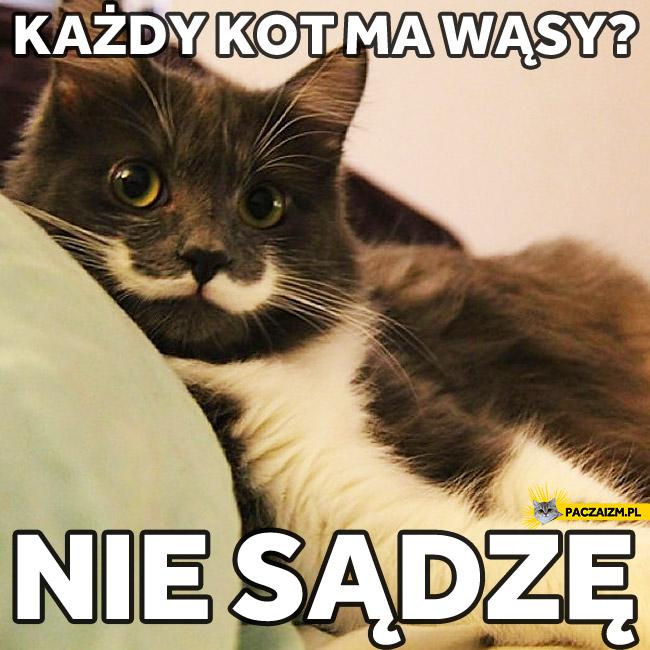 Kot z wąsami