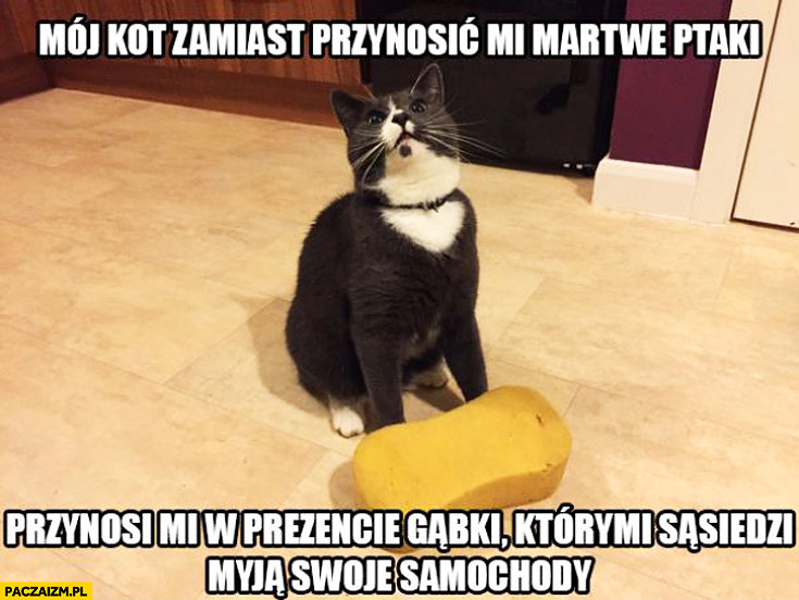 Kot zamiast przynosić martwe ptaki przynosi gąbki