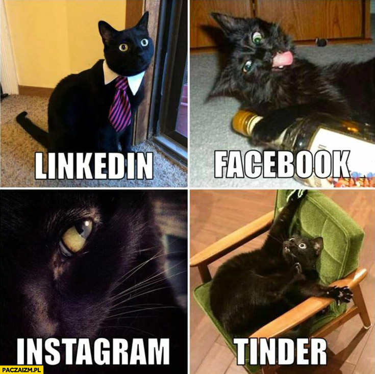 Kot zdjęcie na Linkedin, facebook, instagram, tinder dolly parton challenge