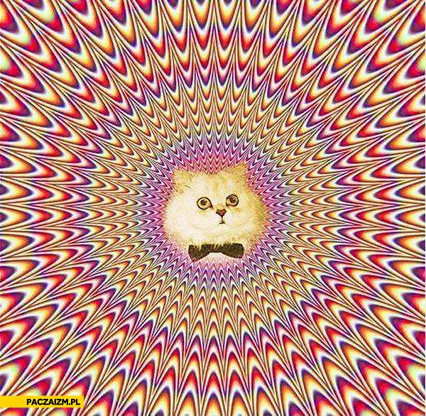 Kot złudzenie optyczne schiza