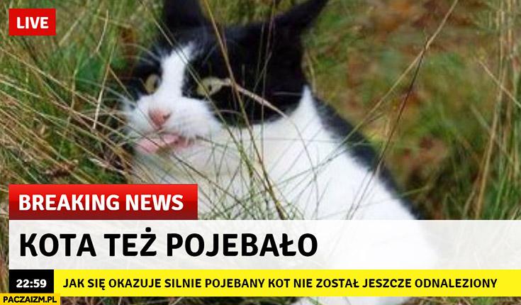 Kota tez pojechało breaking news