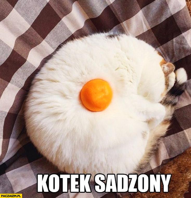 Kotek sadzony