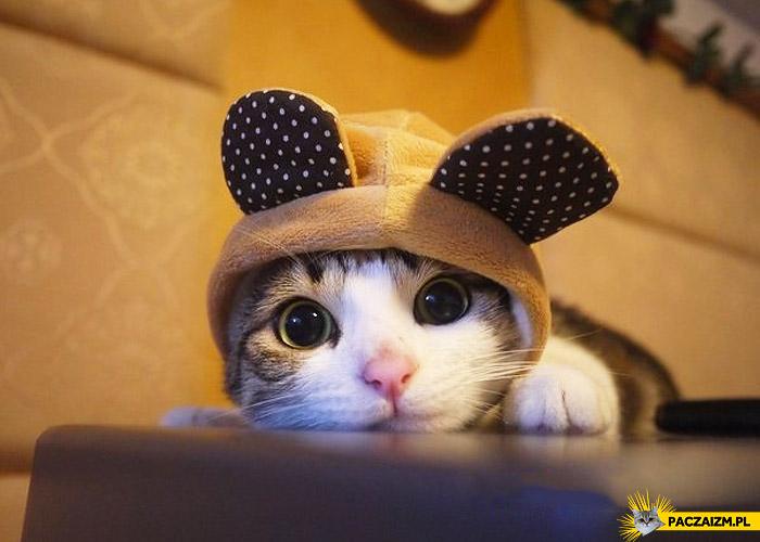 Kotek słodziak