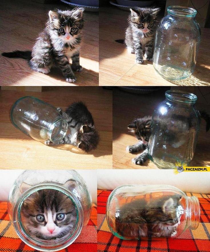 Kotek w słoiczku