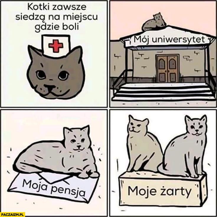 Kotki zawsze siedzą na miejscu gdzie boli mój uniwersytet, moja pensja, moje żarty