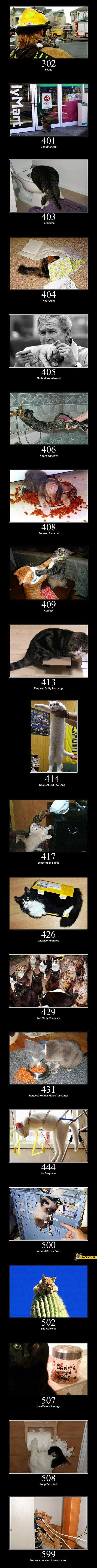Koty jako błędy http