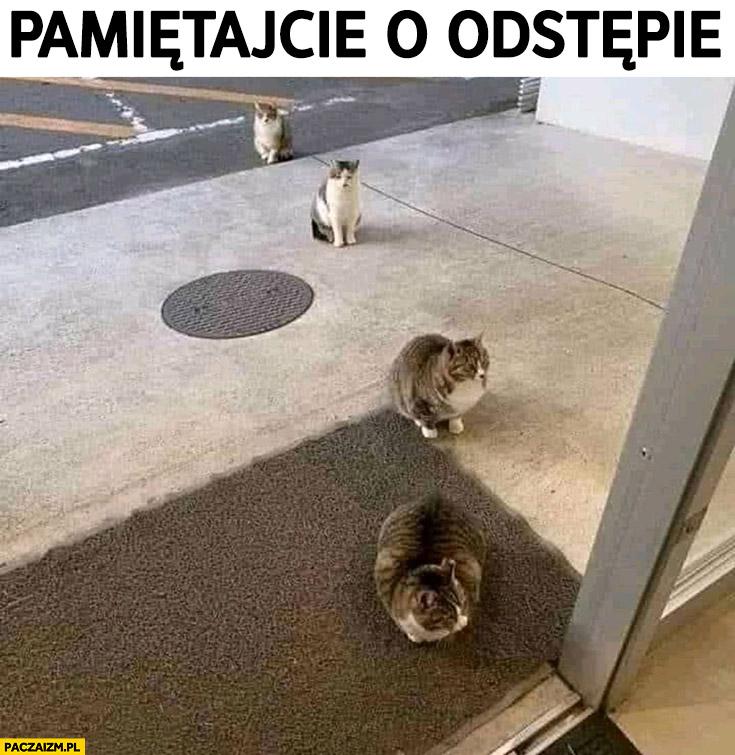 Koty czekają w kolejce do sklepu na zakupy pamiętajcie o odstępie