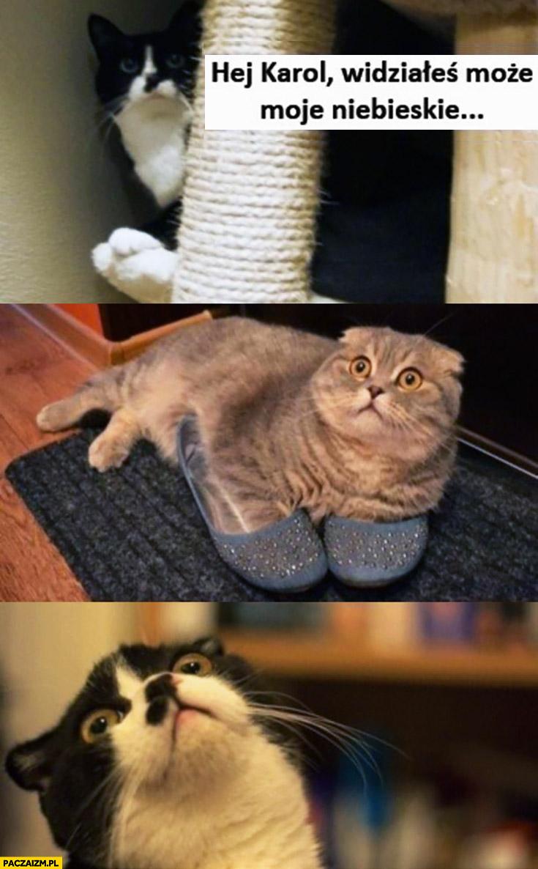 Koty hej Karol widziałeś może moje niebieskie buty kapcie