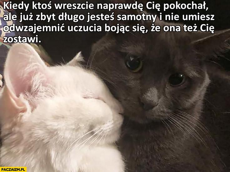 Koty kiedy ktoś wreszcie naprawdę Cię pokochał ale już zbyt długo byłeś samotny i nie umiesz odwzajemnić uczucia bojąc się, że ona też Cię zostawi smutny kot