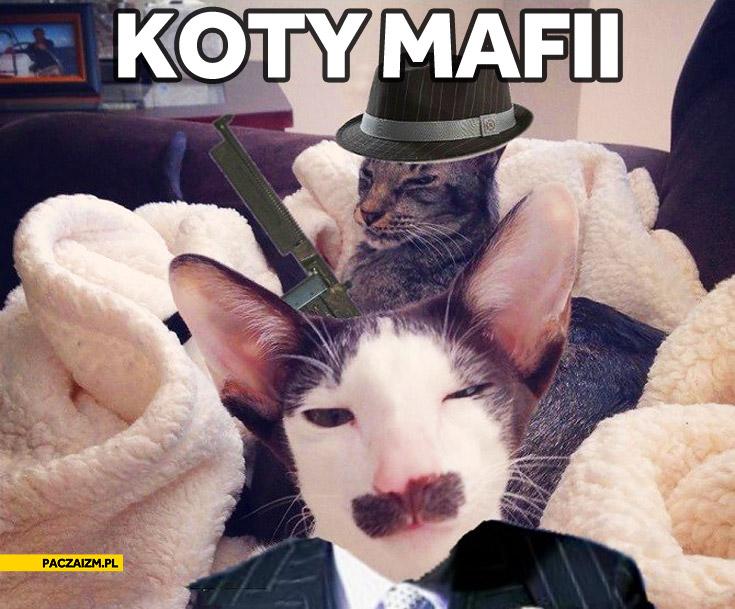 Koty mafii