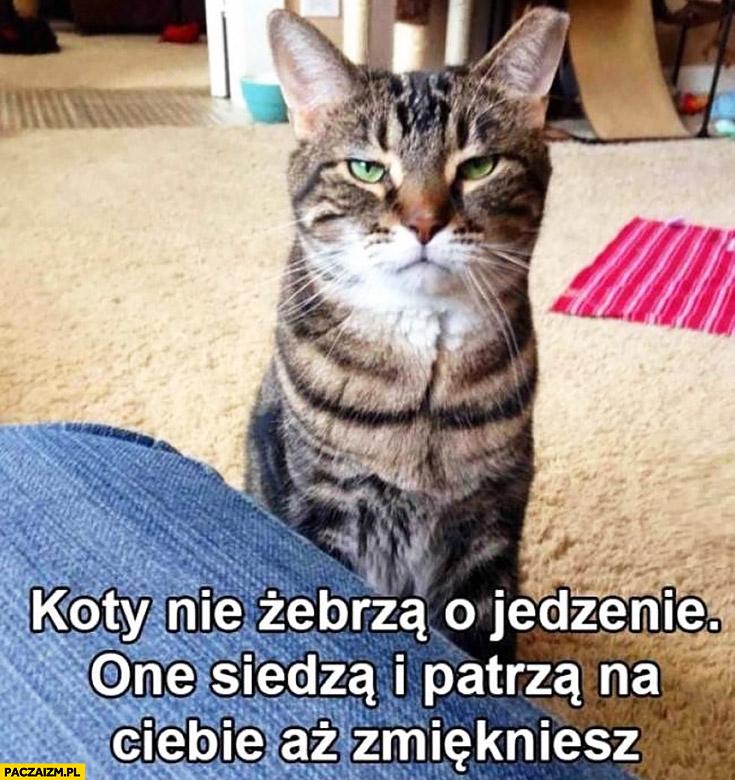 Koty nie żebrzą o jedzenie, one siedzą i patrzą na Ciebie aż zmiękniesz