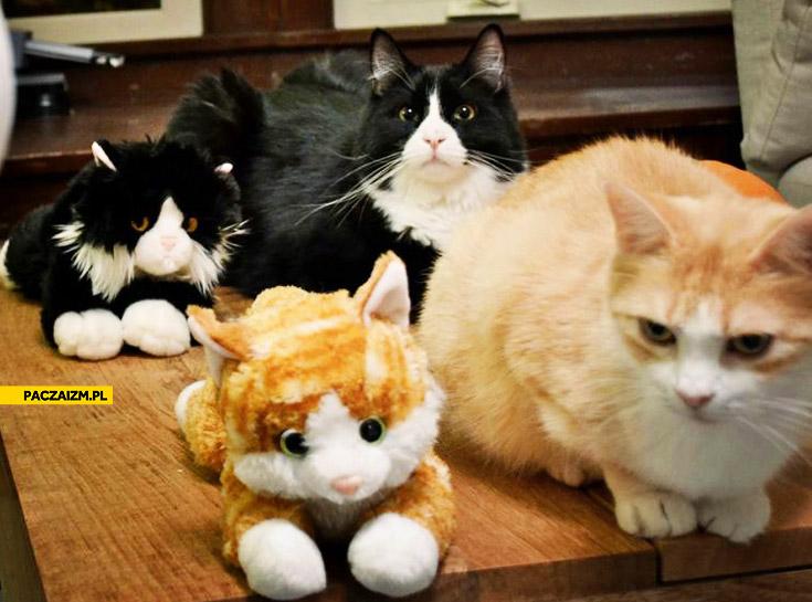 Koty parami