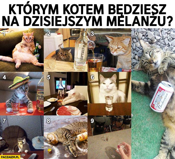Koty pijące alkohol którym kotem jesteś? Numerki cyfry
