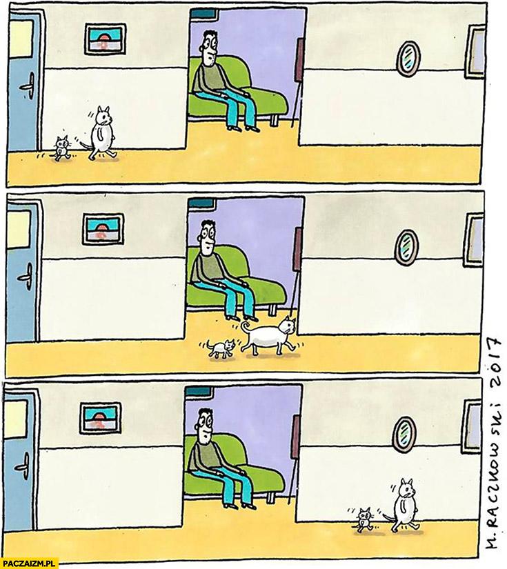 Koty przechodzą na czterech łapach kiedy człowiek widzi Raczkowski