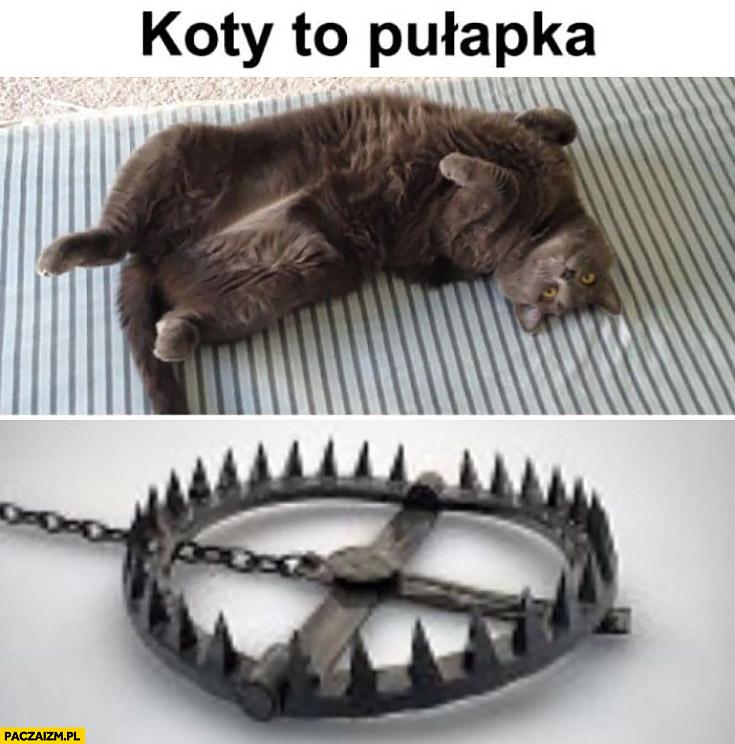 Koty to pułapka leżący kot jak wnyki