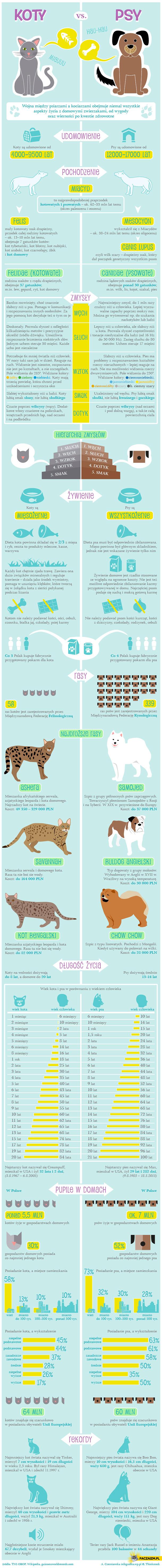 Koty vs psy – infografika
