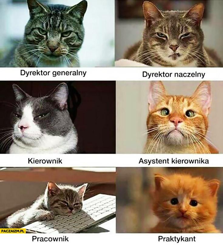 Koty w firmie: dyrektor generalny, naczelny kierownik, asystent kierownika, pracownik, praktykant