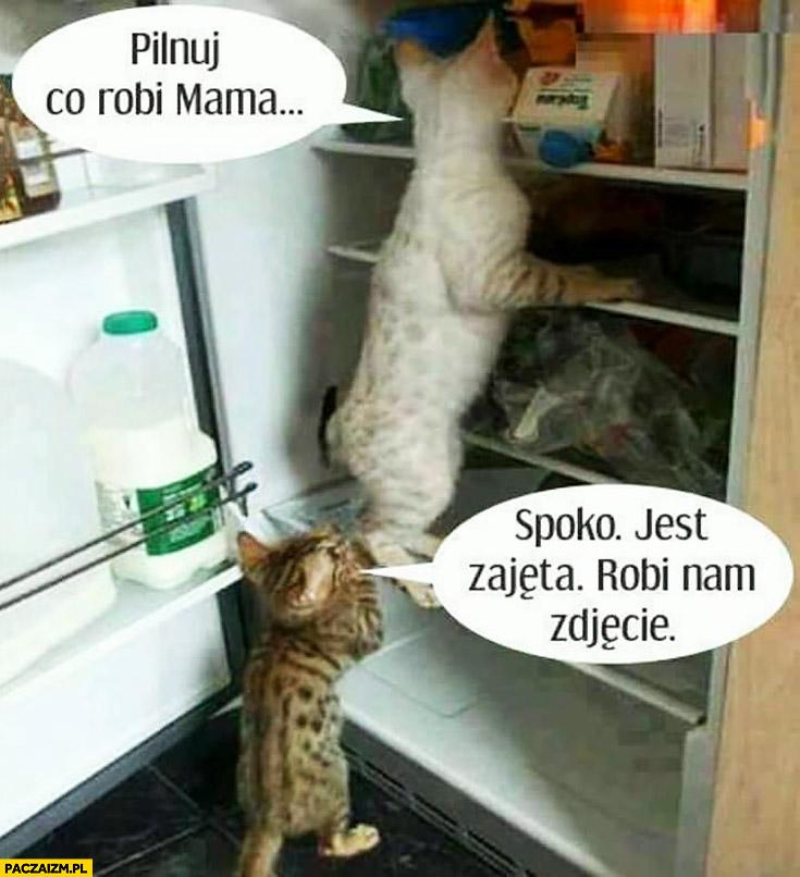 Koty w lodówce pilnuj co robi mama spoko jest zajęta robi nam zdjęcie