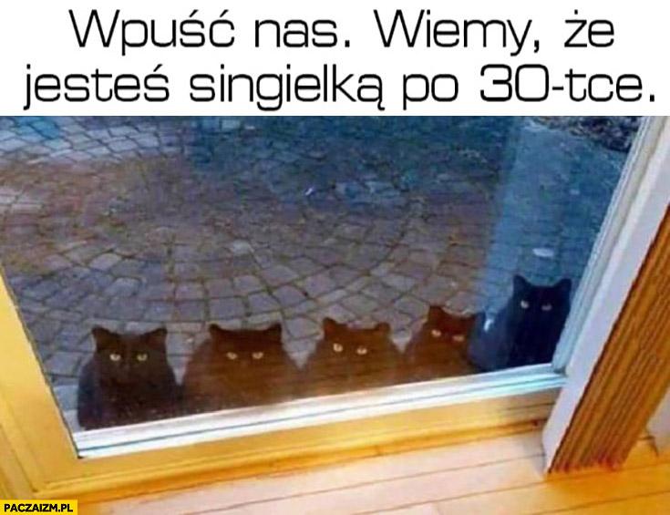 Koty wpuść nas wiemy, że jesteś singielką po trzydziestce 30tce