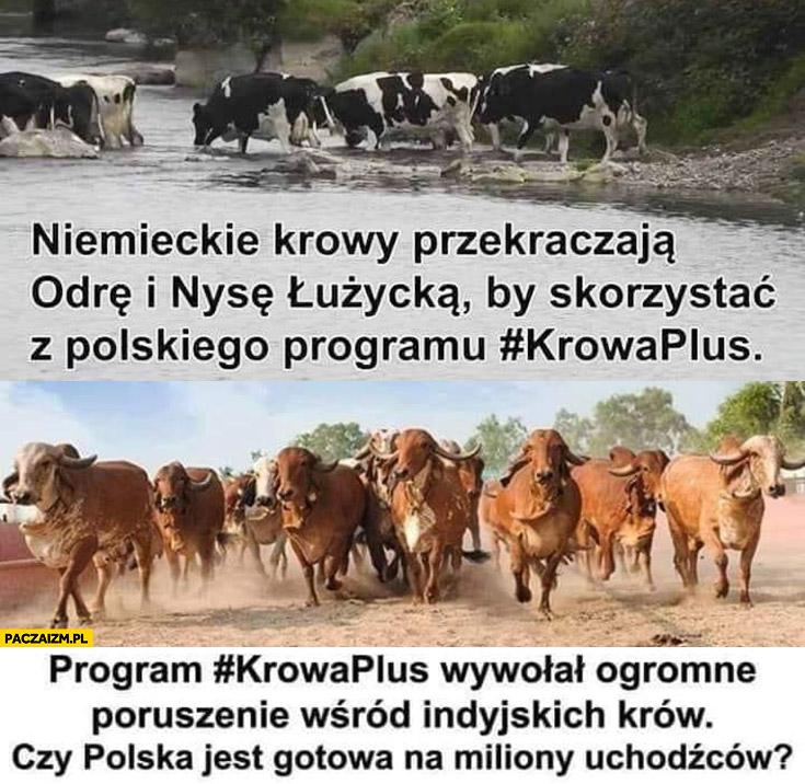 Krowy przekraczają granicę żeby skorzystać z polskiego programu krowa plus czy polska jest gotowa