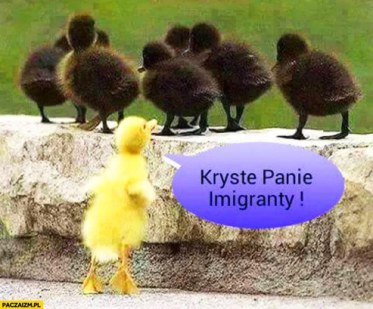 Kryste Panie imigranty kaczki