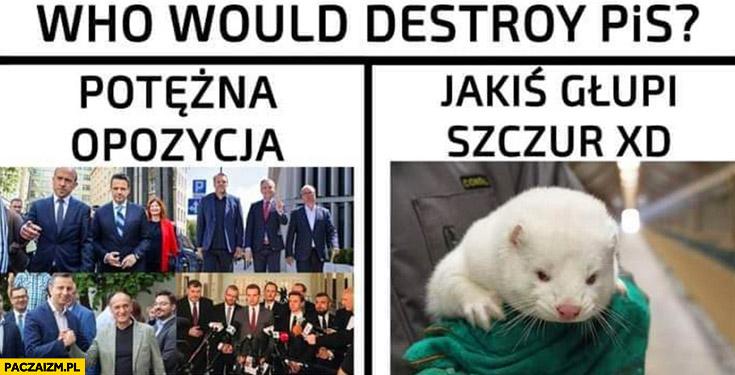 Kto by zniszczył PiS? Potężna opozycja czy jakiś głupi szczur