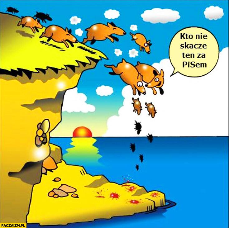 Kto nie skacze ten za PiSem zwierzęta skaczące ze skały
