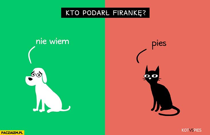 Kto podarł firankę? Pies nie wiem, kot mówi, że pies. Kot vs pies