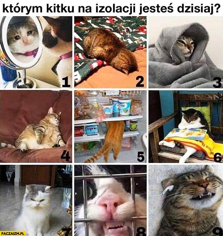 Którym kotem na izolacji jesteś dzisiaj? Kwarantanna kitku