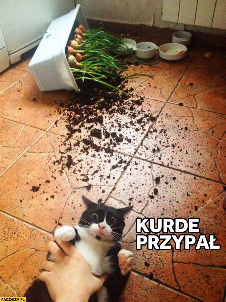 Kurde przypał kot złapany na gorącym uczynku zrzucił doniczkę