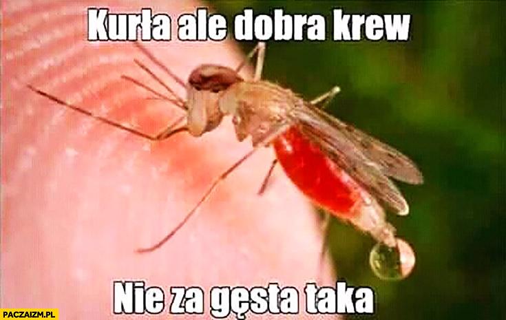 Kurła ale dobra krew, nie za gęsta taka komar typowy Polak nosacz małpa