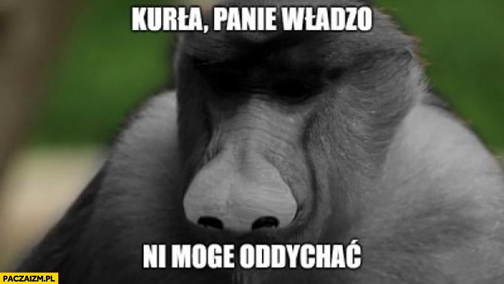 Kurła panie władzo nie mogę oddychać nosacz małpa George Floyd