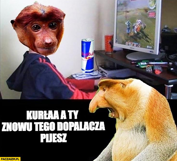 Kurna a Ty znowu tego dopalacza pijesz Pioter Pjoter typowy Polak nosacz małpa