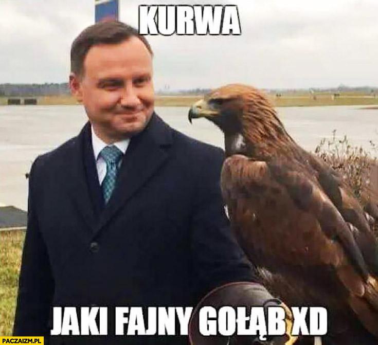 Kurna jaki fajny gołąb Andrzej Duda z sokołem jastrzębiem